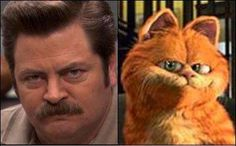 The Cats That Look Like Ron Swanson Tumblr Gets You Meowing Out Loud #cutepets #animalphotography
