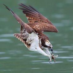 Nature Animals, Animals And Pets, Cute Animals, Beautiful Birds, Animals Beautiful, Amazing Animals, Eagle Pictures, Mundo Animal, Birds Of Prey