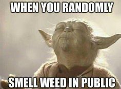 Yoda smelling Kush