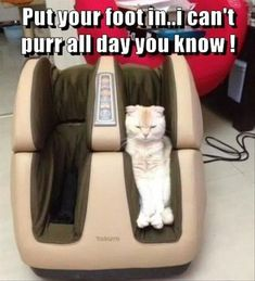 Funny Animal Pictures - 17 Images