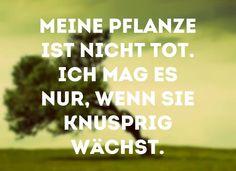 #pflanze - knusprig!