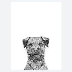 'Baxter The Border Terrier Dog' Print