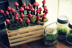 Crate to serve.Toadstool favors for garden woodland fairy birthday party Fairy Birthday Party, Birthday Party Celebration, Sweet 16 Birthday, Birthday Favors, Birthday Ideas, Woodland Fairy, Woodland Wedding, Forest Wedding, Mushroom Plant