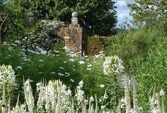 White cottage garden