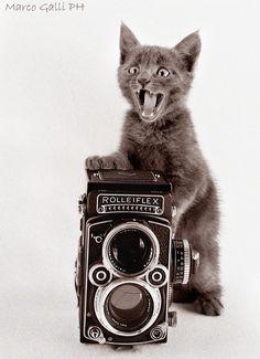 © copyright Marco Galli. Con Gatto Messny by Galli Marco il fotografo dei gatti / 500px