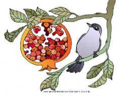 Blackcap and Pomegranate 1 jpg - Birds