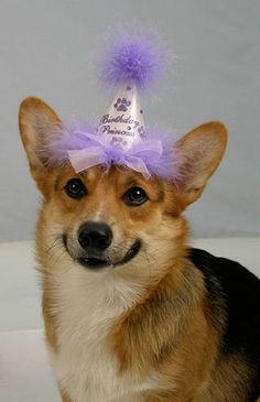 Birthday Princess :) #corgi, #corgibirthday