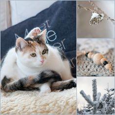Herzenswärme Cats, Winter, Animals, Inspiration, Heart, Winter Time, Biblical Inspiration, Gatos, Animales