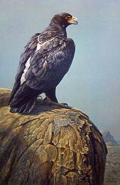 Animalistic Robert Bateman painting (686 works)