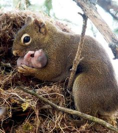Animals 🙈 - Animals, animals wild, animals funny, animals cutest, animals and pets Nature Animals, Animals And Pets, Wild Animals, Beautiful Creatures, Animals Beautiful, Cute Baby Animals, Funny Animals, Baby Squirrel, Cute Squirrel
