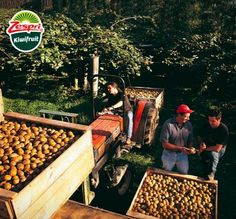 Anche in inverno, il kiwi è Zespri®. E parla italiano - http://www.myeffecto.com/r/1tBl_pn