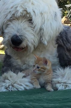 Our Skiilar with one of our new kitty's.
