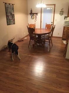 Pergo Applewood Flooring My Kitchen Amp How I Ll
