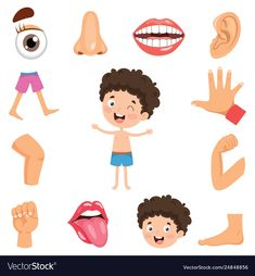 Vector Illustration Of Human Body , Body Parts Preschool Activities, Preschool Body Theme, Preschool Learning Activities, The Human Body, Cartoons For Toddlers, Free Printable Alphabet Worksheets, Cartoon Body, All About Me Preschool, Learning English For Kids