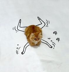 Doodle Challenge Transforms Ordinary Cat Photo into Fantastically Amusing Scenes - My Modern Met