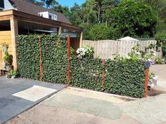 Hedera Helix, Outdoor Gardens, Outdoor Structures, Outdoor Decor, Garden Ideas, Gardens, Backyard Ideas, Ivy