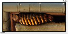Vivre simplement en Grèce: C'est incroyable ou peuvent se cacher les abeilles pour faire leur essaim.