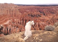 As he travels throughout the United states with his beautiful and fittingly named dog Wolf, he takes photos of some of the beautiful locations they visit.