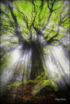 broceliande forest - bretagne - france - Ponthus under sunlights by philippe MANGUIN photographies, tree angel. All Nature, Amazing Nature, Science Nature, One With Nature, Beautiful World, Beautiful Places, Trees Beautiful, Beautiful Forest, Simply Beautiful