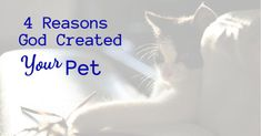 4 Reasons God Created Your Pet - Faith in the News Hernia Repair, Inspirational Articles, Chronic Migraines, Have A Shower, Kittens Playing, Cat Sitting, Unconditional Love, Live Long, The Only Way