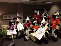 The cows came out at Fox 8 today...