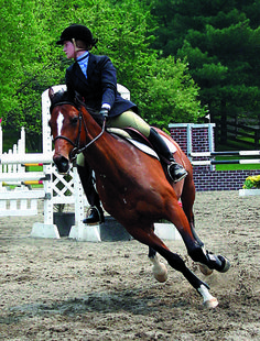 1000+ images about horse medications on pinterest | pet