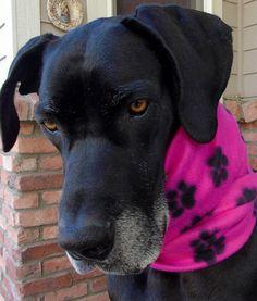 Giant dog infinity neck warmer snood Large toasty warm
