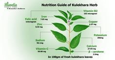 #Kulekhara herb is a missed opportunity for bringing in nutrition security to the poorest and the marginalized despite its easy availability and high nutritional value. #Branolia's #Kulerron is enriched with Kulekhara