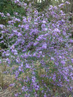 Flowering Shrubs, Botanical Gardens, Flowers, Plants, Flowering Bushes, Plant, Royal Icing Flowers, Flower, Florals