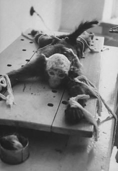 monkey strapped to table and being used for medical research at soviet Institute for experimental pathology and therapeutics at sukhumi | russia 1959 | foto: howard sochurek