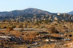 ➤ Desert Chronicles - CRISTOPHER CICHOCKI : CRISTOPHERSEA.COM