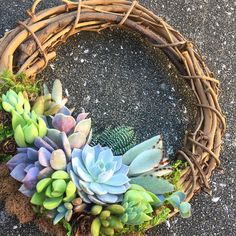 Living succulent wreath spring 59 Ideas for 2019 Purple Succulents, Types Of Succulents, Hanging Succulents, Succulents In Containers, Cacti And Succulents, Succulent Display, Succulent Bouquet, Succulent Terrarium, Succulents Drawing