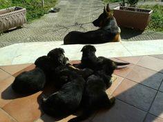 Layla family lovely my dogs