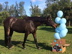 It's a boy announcement with my horse