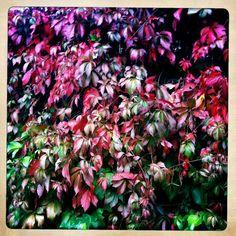 Retrato de un jardín en otoño   Fotografía   EL PAÍS