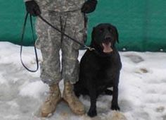 Military Dog Who Served 9 Tours Denied — Then Gets — Proper Burial