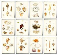 Seashell Gallery Wall_2