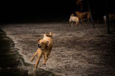 Rennender Hund am Grunewaldsee in Berlin