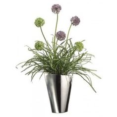 Purple Allium in a vase.