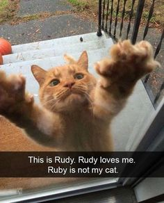 23 Funny Animal Pictures Of The Day - Funny Animals - Daily LOL Pics animals animal dog animaux Funny Animal Memes, Cute Funny Animals, Funny Animal Pictures, Cat Memes, Funny Cute, Cute Cats, Funny Memes, Funny Fails, Pretty Cats