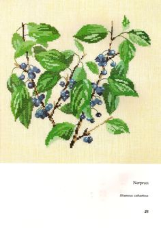 Fleurs et fruits sauvages: Nerprun (rhamnus catharticus)