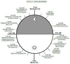 ¿Como funciona nuestro Reloj biologico interno