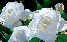 White Rose Garden by Brian Davis presented by World Wide Art White Roses, White Flowers, Beautiful Flowers, Beautiful Things, Art Hyperréaliste, Brian Davis, Rose Bush, Flower Photos, Botanical Art