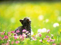 PINTURAS Y PENSAMIENTOS:   Te deseo que acaricies un gato, alimentes a un p...