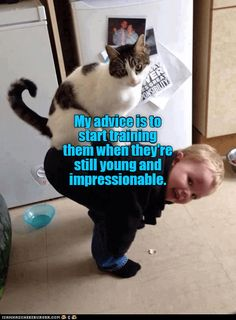 Catslave-in-training http://cheezburger.com/9139823360