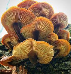 """Mushroom Ninja"" Explores the Beautiful World of Exotic Fungi on His Hikes - My Modern Met"