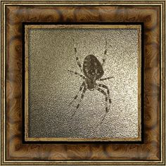 Araneus Diadematus Framed Print featuring the photograph Golden Cross Spider by… Totally Awesome, Spider, Photograph, Framed Prints, Men, Image, Design, Photography, Spiders