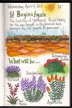 Begin Again. . .One of my daily sketches from my art journal. The first gardening day of the season.