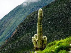 Valles Calchaquíes Noroeste Argentina