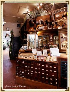 My favorite store in San Francisco - Paxton Gate Curiosities